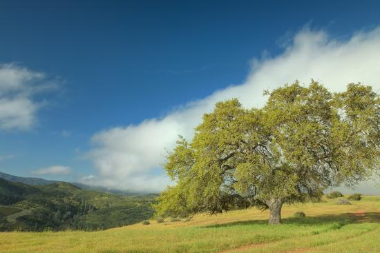 Oak Tree and Central Valley Hills, California Photographic Print by Vincent  James | Art com