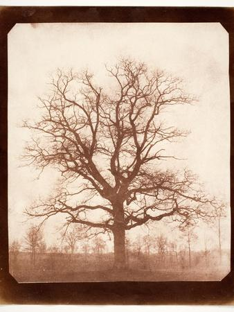 https://imgc.artprintimages.com/img/print/oak-tree-in-winter-early-1840s_u-l-pk5fm80.jpg?p=0