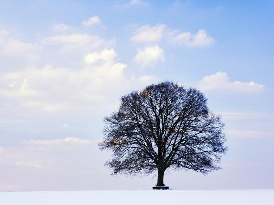 Oak Tree in Winter-Frank Lukasseck-Photographic Print
