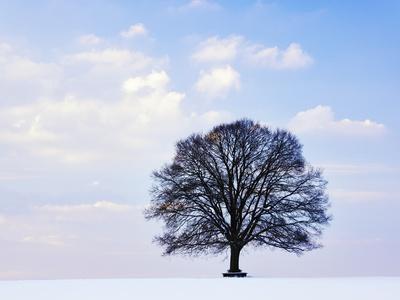 https://imgc.artprintimages.com/img/print/oak-tree-in-winter_u-l-pzl0g80.jpg?p=0