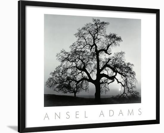 Oak Tree, Sunset City, California, 1932-Ansel Adams-Framed Art Print