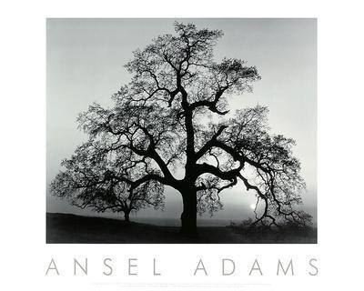 https://imgc.artprintimages.com/img/print/oak-tree-sunset-city-california_u-l-f8jx2s0.jpg?p=0