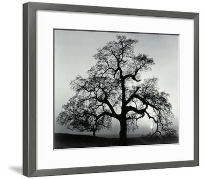 Oak Tree, Sunset City, California-Ansel Adams-Framed Art Print