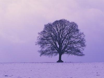 https://imgc.artprintimages.com/img/print/oak-tree-winter-landscape-germany_u-l-pzkprh0.jpg?p=0