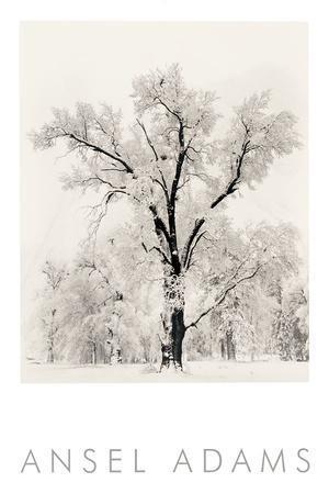 https://imgc.artprintimages.com/img/print/oak-tree_u-l-f8jw120.jpg?p=0