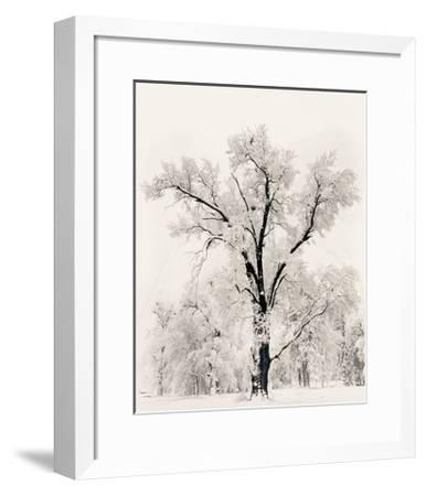 Oak Tree-Ansel Adams-Framed Art Print