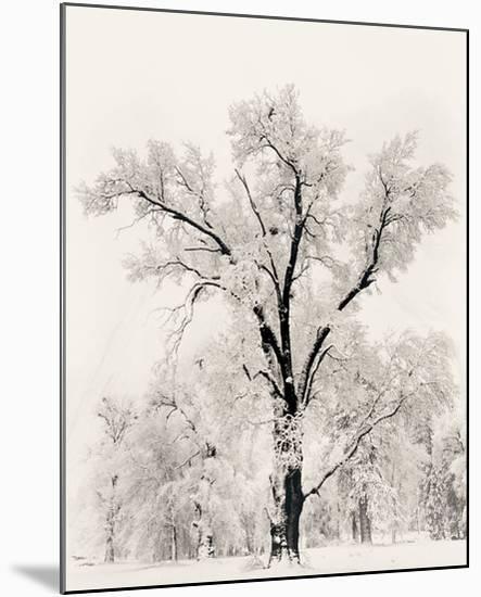 Oak Tree-Ansel Adams-Mounted Art Print