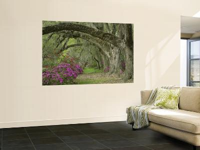 Oak Trees Above Azaleas in Bloom, Magnolia Plantation, Near Charleston, South Carolina, USA-Adam Jones-Wall Mural