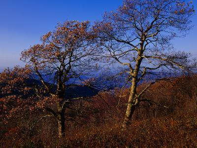 Oak Trees in Autumn Colors in a Mountain Scenic-Raymond Gehman-Photographic Print