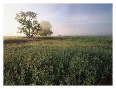 Oak trees shrouded in fog, Flint Hills, Kansas-Tim Fitzharris-Art Print