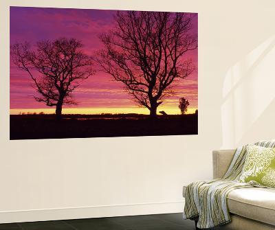 Oak Trees, Sunset, Sweden--Giant Art Print