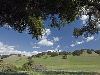 Oak Woodlands and Spring Clouds, California-Rich Reid-Photographic Print