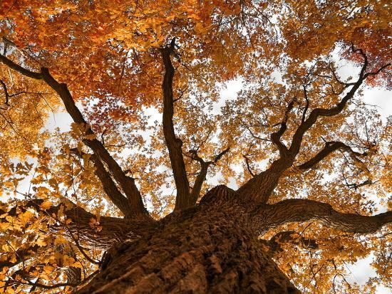 Oak-Schlegelfotos-Photographic Print