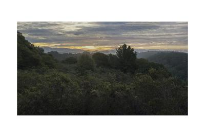 Oakland Redwood Park, East View Morning Clouds 3-Henri Silberman-Photographic Print