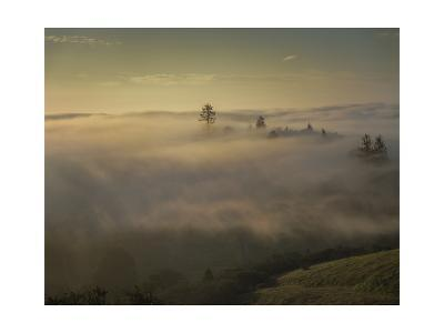 Oakland Redwood Park, East View Morning Fog-Henri Silberman-Photographic Print