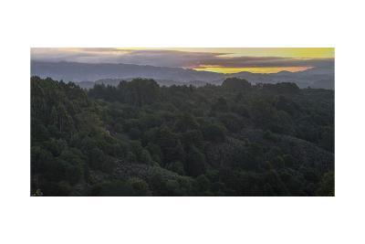 Oakland Redwood Park, East View Morning Panorama 2-Henri Silberman-Photographic Print