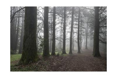 Oakland Redwood Peak trail in Fog-Henri Silberman-Photographic Print