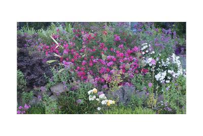 Oakland Spring Garden-Henri Silberman-Photographic Print