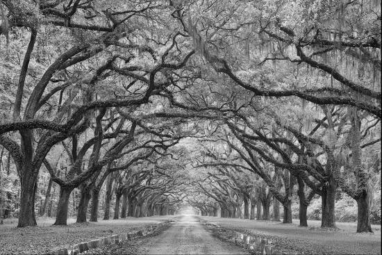 Oaks Avenue 1 BW-Moises Levy-Photographic Print