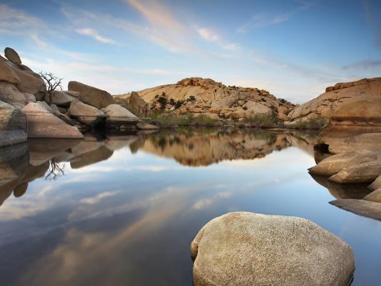 Oasis in Joshua Tree National Park, California, USA-Patrick Smith-Photographic Print