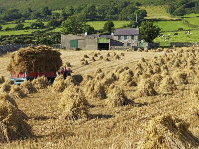 Oat Stooks, Knockshee, Mourne Mountains, County Down, Ulster, Northern Ireland, UK, Europe-Jeremy Lightfoot-Photographic Print