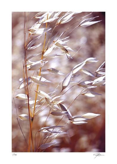 Oats 1-Ken Bremer-Giclee Print
