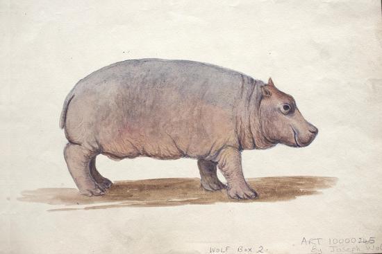 Obaysch, C.1850-Joseph Wolf-Giclee Print