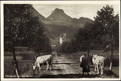 Oberaudorf Am Inn, Rinderherde Kommt Von Der Weide--Giclee Print