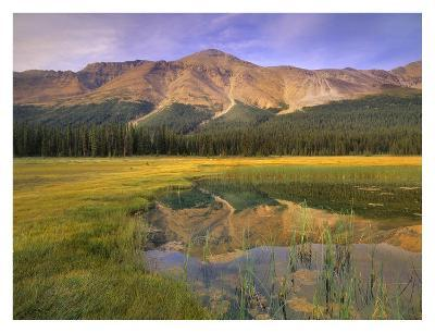 Observation Peak and coniferous forest reflected in pond, Banff National Park, Alberta-Tim Fitzharris-Art Print