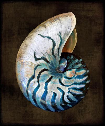 Ocean Treasure IV-Caroline Kelly-Art Print