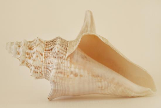 Ocean Treasures IX-Karyn Millet-Photographic Print