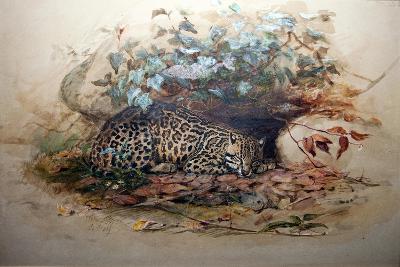 Ocelot, 1851-52-Joseph Wolf-Giclee Print