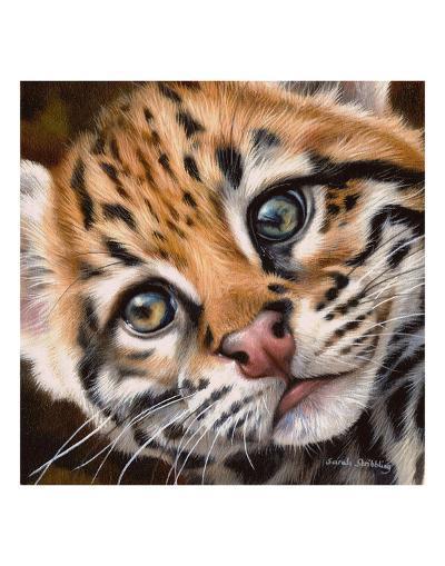 Ocelot Kitten-Sarah Stribbling-Art Print