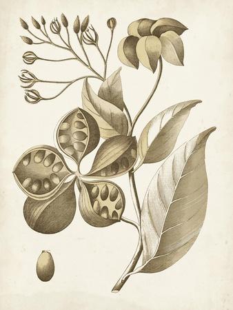 https://imgc.artprintimages.com/img/print/ochre-botanical-ii_u-l-q1blebt0.jpg?p=0