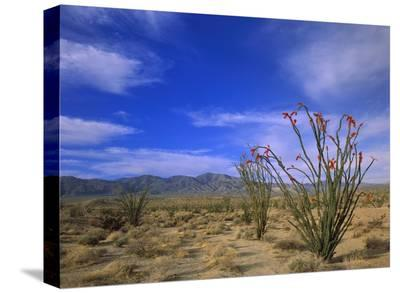 Ocotillo and the Vallecito Mountains, Anza-Borrego Desert State Park, California-Tim Fitzharris-Stretched Canvas Print