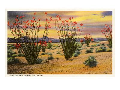 Ocotillo Blooming in Desert--Art Print
