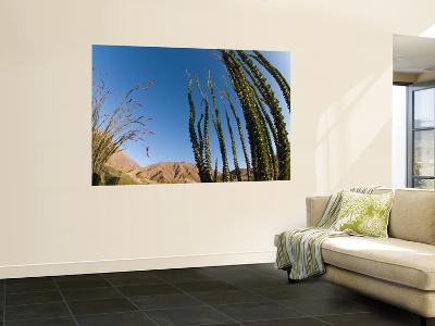 Ocotillo Cactus-Carol Polich-Wall Mural