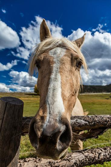 OCTOBER 1, 2016 - Close up horse snoot, near Ridgway, Colorado - just off Log Hill--Photographic Print
