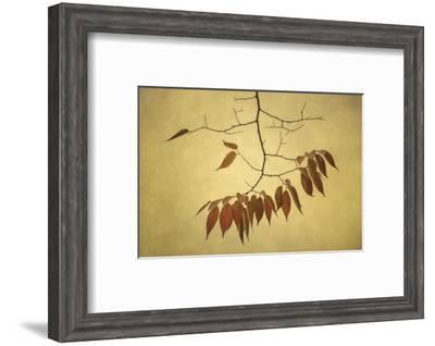 October Muse-David Lorenz Winston-Framed Art Print