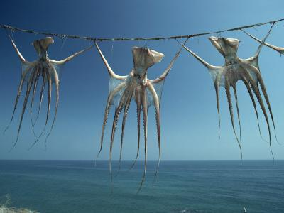 Octopi Hung Out to Dry, Nerja, Costa Del Sol, Andalucia, Spain, Europe-Robert Francis-Photographic Print