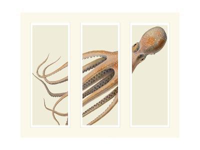 Octopus on 3 panels-Fab Funky-Art Print