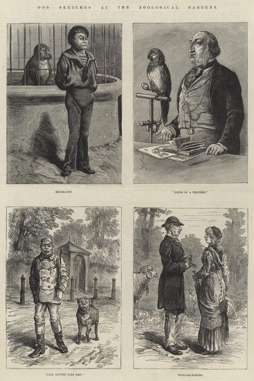 Odd Sketches at the Zoological Gardens-Johann Nepomuk Schonberg-Giclee Print