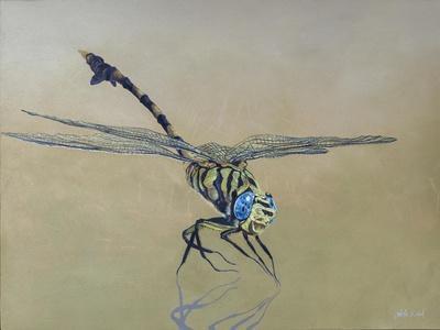 Dragon fly, 2009