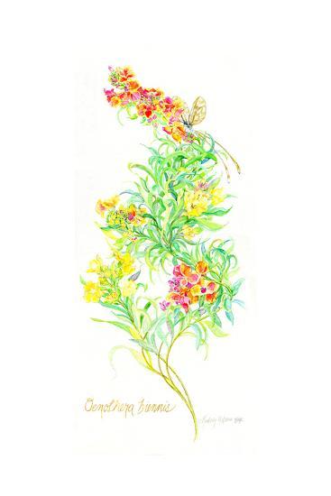 Oenothera Biennis, 2001-Kimberly McSparran-Giclee Print
