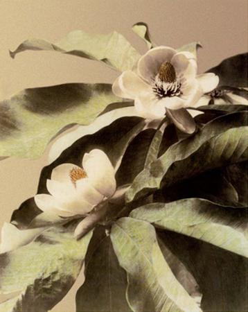 Lotus Flower, Vintage Japanese Photography