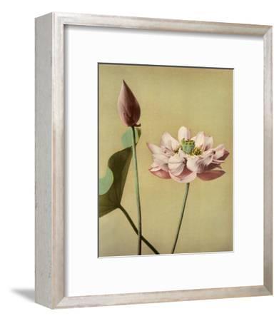 Lotus Flower, Vintage Japanese Photography