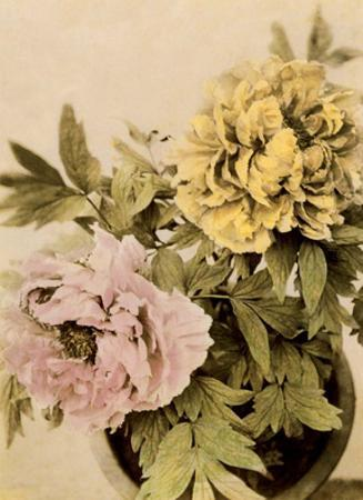 Peonies, Vintage Japanese Photography