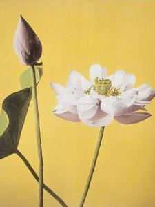 Lotus, 19th Century by Ogawa Kazuma
