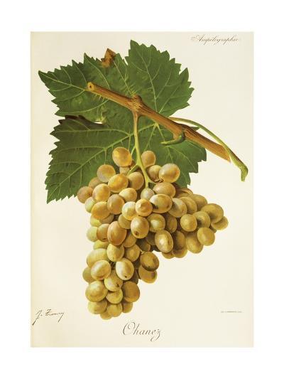 Ohanez Grape-J. Troncy-Giclee Print