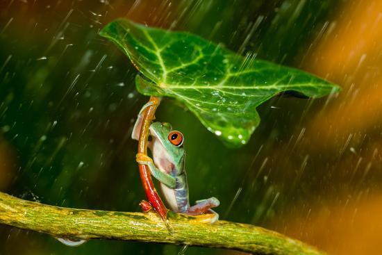 Ohh Noo :( It's Raining-Kutub Uddin-Photographic Print